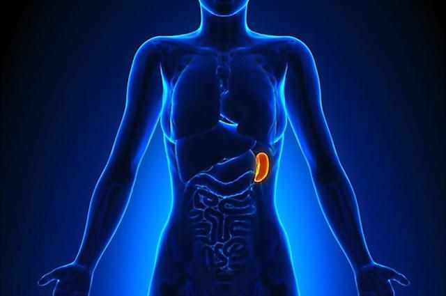 i due punti puliscono i benefici della polvere quale sistema rimuove i prodotti di scarto dal corpo